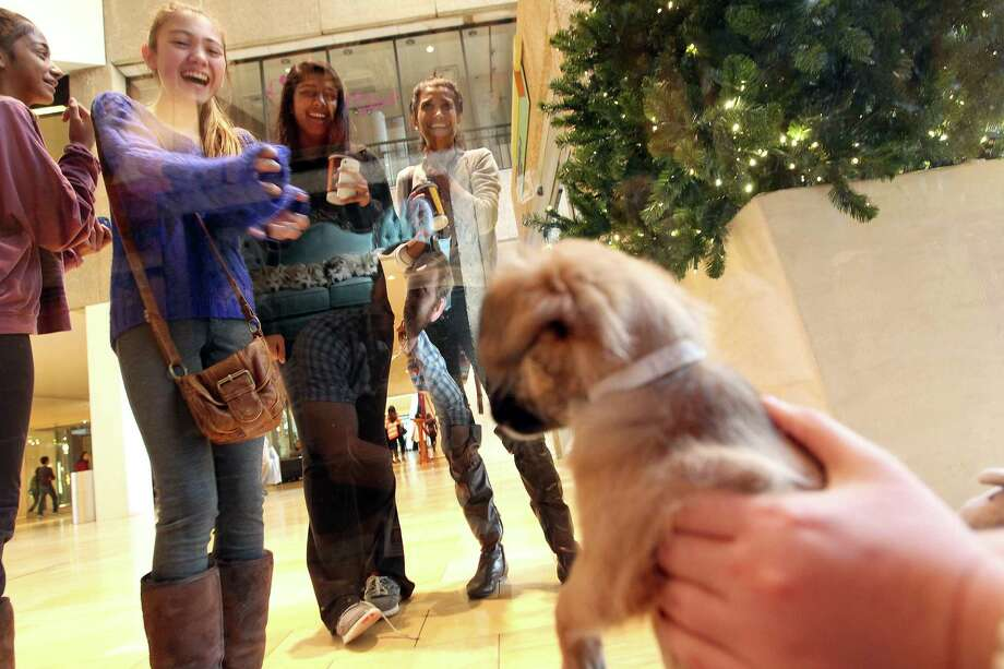 From left, Simi Bontha, Cheyenne Smith, Nina Bontha and Ritu Bontha react when they see adoptable dog, Helena, a Jack Russell terrier-mix being held by Mary Connelly, a volunteer with the Houston SPCA, outside of Neiman Marcus in the Galleria Friday, Nov. 23, 2012, in Houston. Photo: Johnny Hanson, Houston Chronicle / © 2012  Houston Chronicle