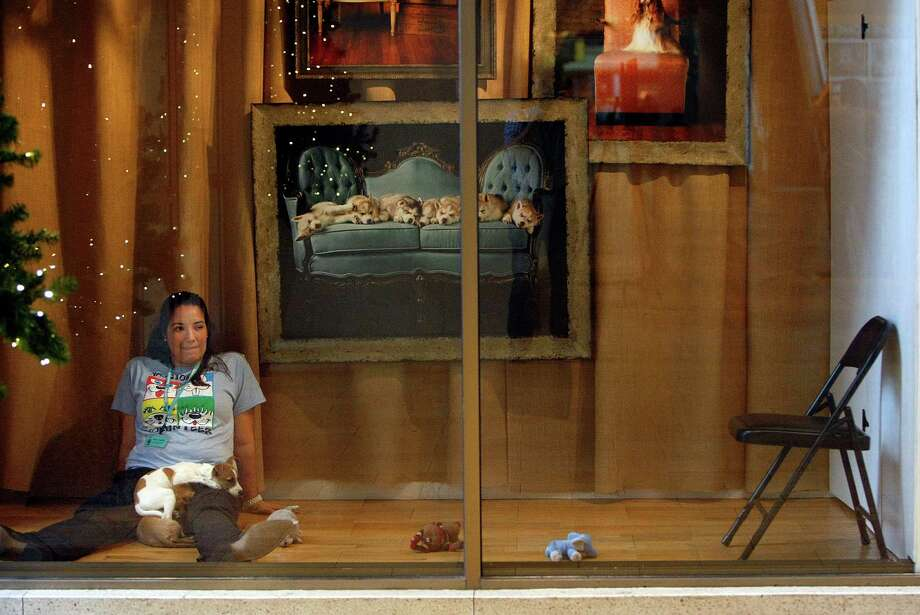 Mary Connelly, a volunteer with the Houston SPCA, sits in a storefront window at Neiman Marcus in the Galleria with adoptable dog, Hugh, a Jack Russell terrier-mix, on her lap Friday, Nov. 23, 2012, in Houston. Photo: Johnny Hanson, Houston Chronicle / © 2012  Houston Chronicle