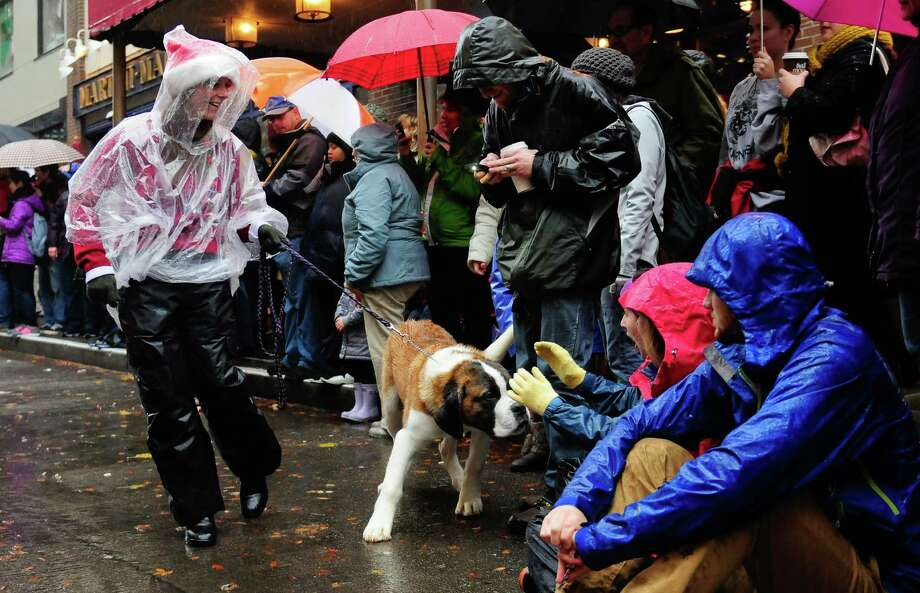 Spectators pet an eager St. Bernard. Photo: LINDSEY WASSON / SEATTLEPI.COM