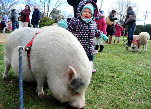 Hadleigh Gelineau, 1, of Fairfield, pets a pig during the Fairfield Chamber of Commerce's annual visit from Santa Saturday, Nov. 24, 2012 at Sherman Green in Fairfield, Conn. Photo: Autumn Driscoll / Connecticut Post