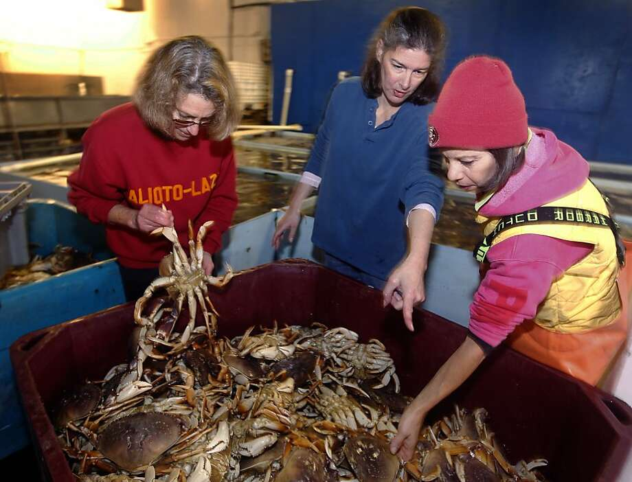 Mary Ann Shepherd (left), Angel Cincotta and Annette Traverso sort through a bin of Dungeness crabs. Photo: Paul Chinn, The Chronicle