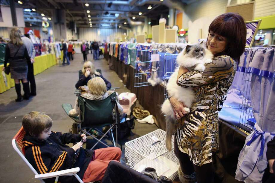 A woman cuddles her cat prior to judging at the Governing Council of the Cat Fancy's 'Supreme Championship Cat Show' held in the NEC on November 24, 2012 in Birmingham, England. Photo: Oli Scarff, Getty Images / 2012 Getty Images