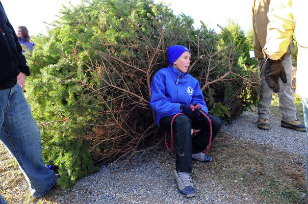 John Reid, 8, of Darien, takes a breather as he helps pull Christmas tree the family has chosen back to their car while at Jones Family Farm in Shelton, Conn. on Saturday November 24, 2012. Photo: Christian Abraham / Connecticut Post