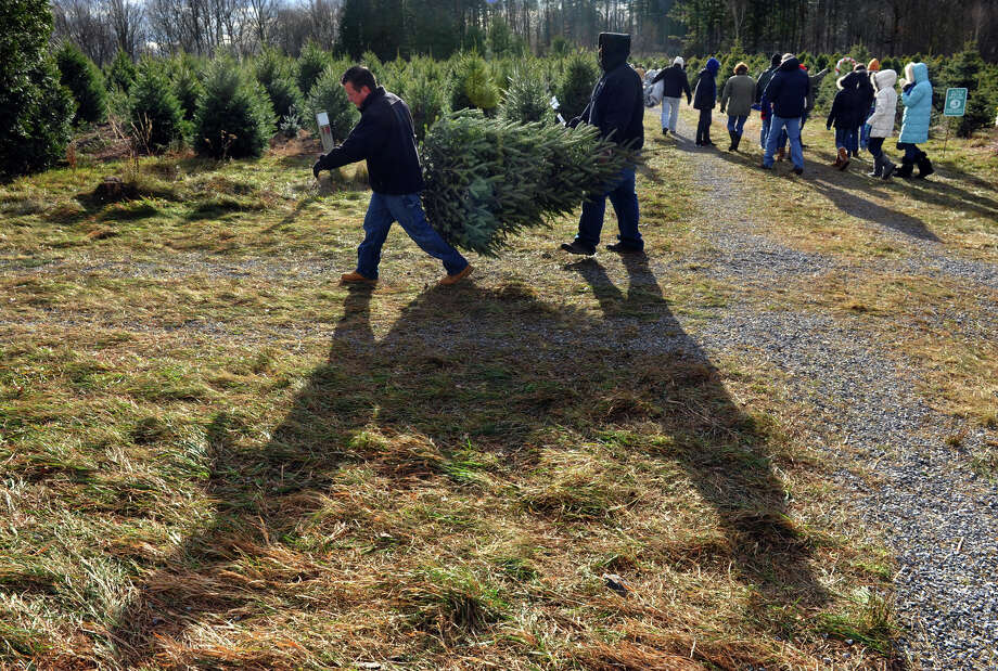 Families come from as far away as Long Island and New York as well as in our own backyard to get a Christmas tree at Jones Family Farm in Shelton, Conn. on Saturday November 24, 2012. Photo: Christian Abraham / Connecticut Post