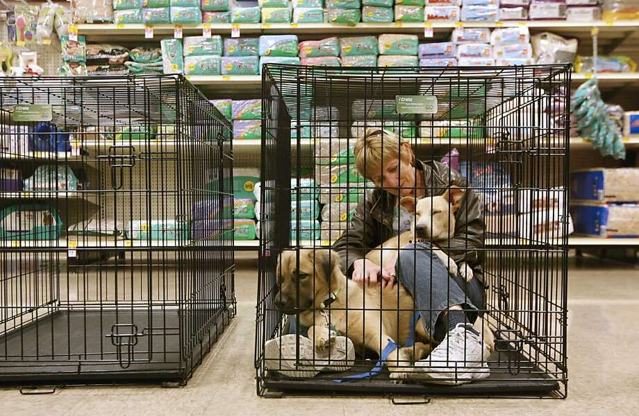 Joyce Clarin, of Bellevue, Iowa, sits in a cage with Macho, left, while Pee-wee falls asleep in her lap during a pet adoption event for the Jackson County Humane Society held at PetSmart in Dubuque, Iowa, Sunday, Nov. 25, 2012. The Jackson County Humane Society has about 25 animals from the east coast, many of them orphaned by Superstorm Sandy. (AP Photo/Telegraph Herald, Jeremy Portje) Photo: Jeremy Portje, Associated Press