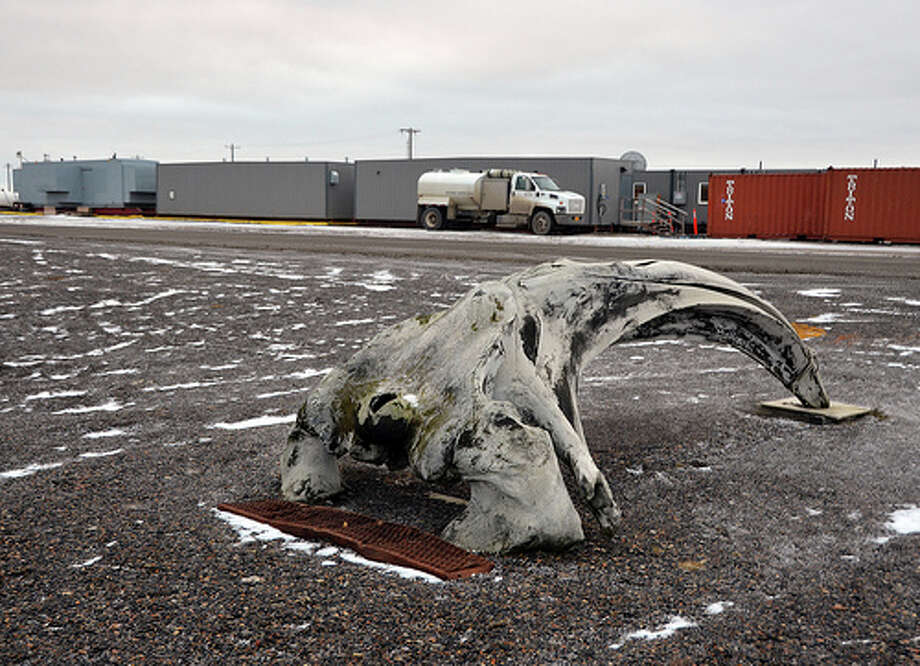 A whale bone sits on the beach in Barrow, Alaska. Shell's crew camp can be seen in the background. (Jennifer A. Dlouhy / The Houston Chronicle)