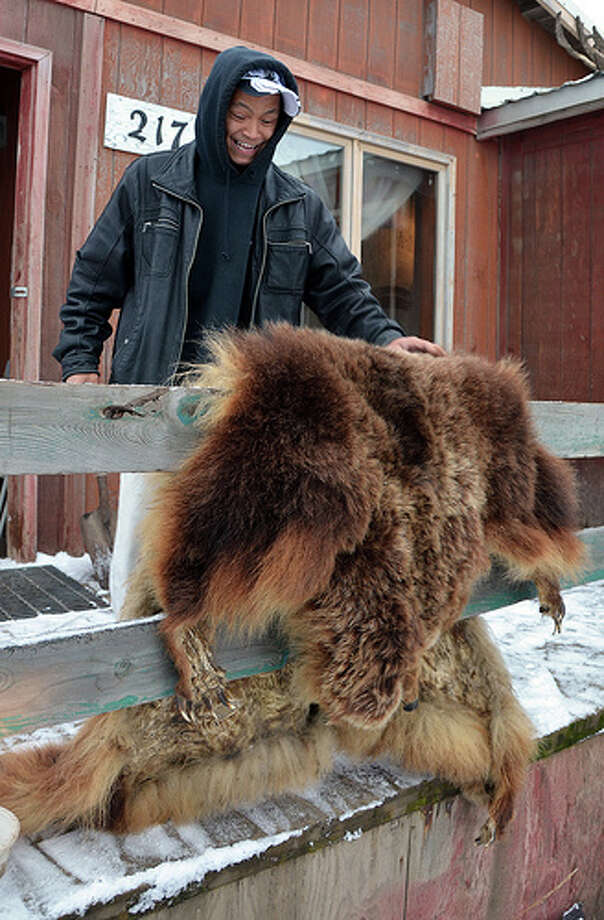 Thomas Napageak Jr., who recently ended a three-year stint as mayor of Nuiqsut, Alaska, shows off a pelt outside his home. (Jennifer A. Dlouhy / The Houston Chronicle)