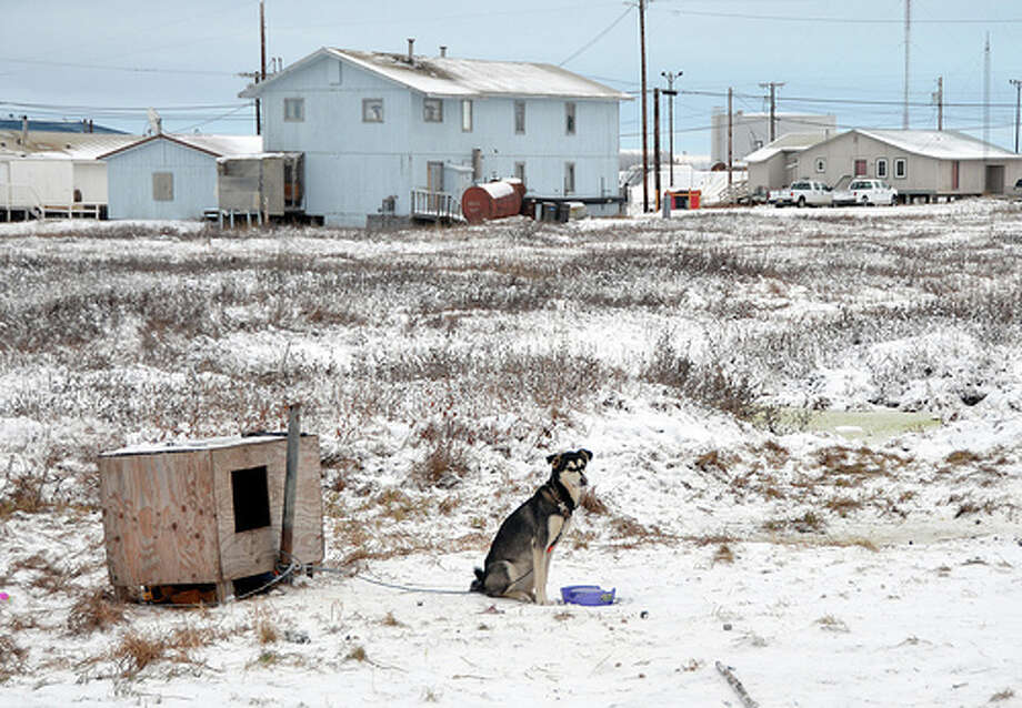 Dogs are tethered to their homes in Nuiqsut, Alaska. (Jennifer A. Dlouhy / The Houston Chronicle)
