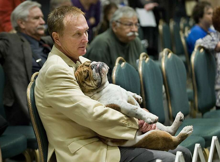 Say goodnight, Gracie:Micah Leslie and his bulldog, Gracie, watch the Winners Dog competition at the Hilton in Costa Mesa, Calif. Well, mostly just Micah. Photo: Mindy Schauer, Associated Press