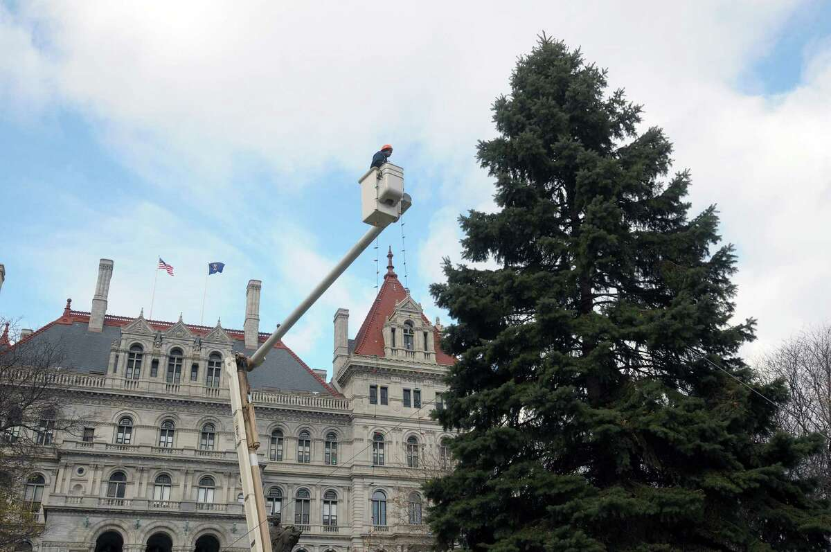 Robert Canady works from a bucket truck as a crew from OGS strung lights on the Christmas tree on the east side of the capitol on Monday, Nov. 26, 2012 in Albany, NY. There are two trees set up for the holiday outside the capitol, this one on the east lawn and the other tree is on the Empire State Plaza. (Paul Buckowski / Times Union)