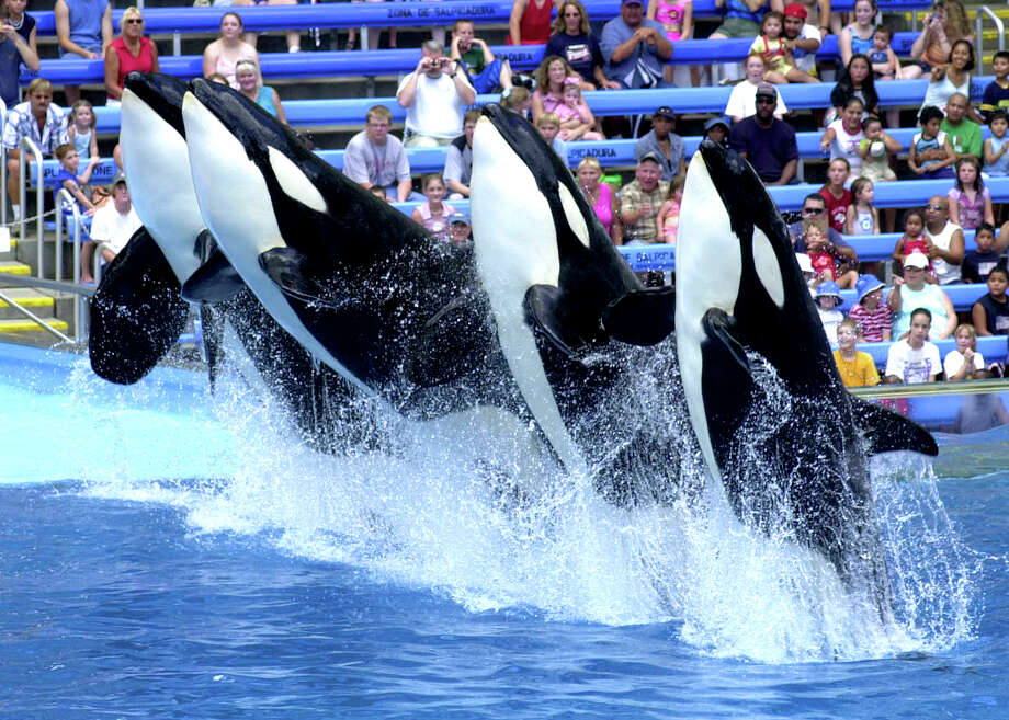 But maybe you feel like getting 3,846,449 season passes for Sea World, including the Aquatica water park. Photo: Express-News/File Photo
