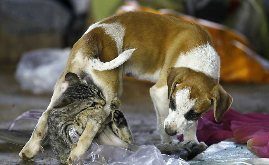 This is totally harshing my buzz: Unlike kitties, dogs don't get off on catnip. (Homeless camp, Mumbai.) Photo: Rafiq Maqbool, Associated Press