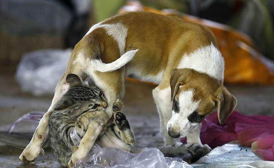 This is totally harshing my buzz:Unlike kitties, dogs don't get off on catnip. (Homeless camp, Mumbai.) Photo: Rafiq Maqbool, Associated Press