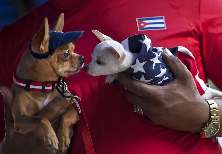 Diplomatic overtures:In Havana, a Yankee Doodle doggy tries to make friends with his Cuban neighbor. (Fall Canine Expo.) Photo: Ramon Espinosa, Associated Press