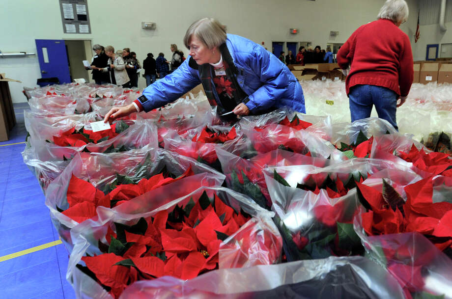 "Pat Ford, of Brookfield, places ""thank you"" notes in the poinsettia plants that are ready for distribution Tuesday morning, Nov. 27, 2012. Members of the Danbury/New Fairfield Woman's Club and Danbury Men's Club met at the PAL building in Danbury Tuesday to deliver poinsettias that they sold as a fundraiser. Photo: Carol Kaliff / The News-Times"