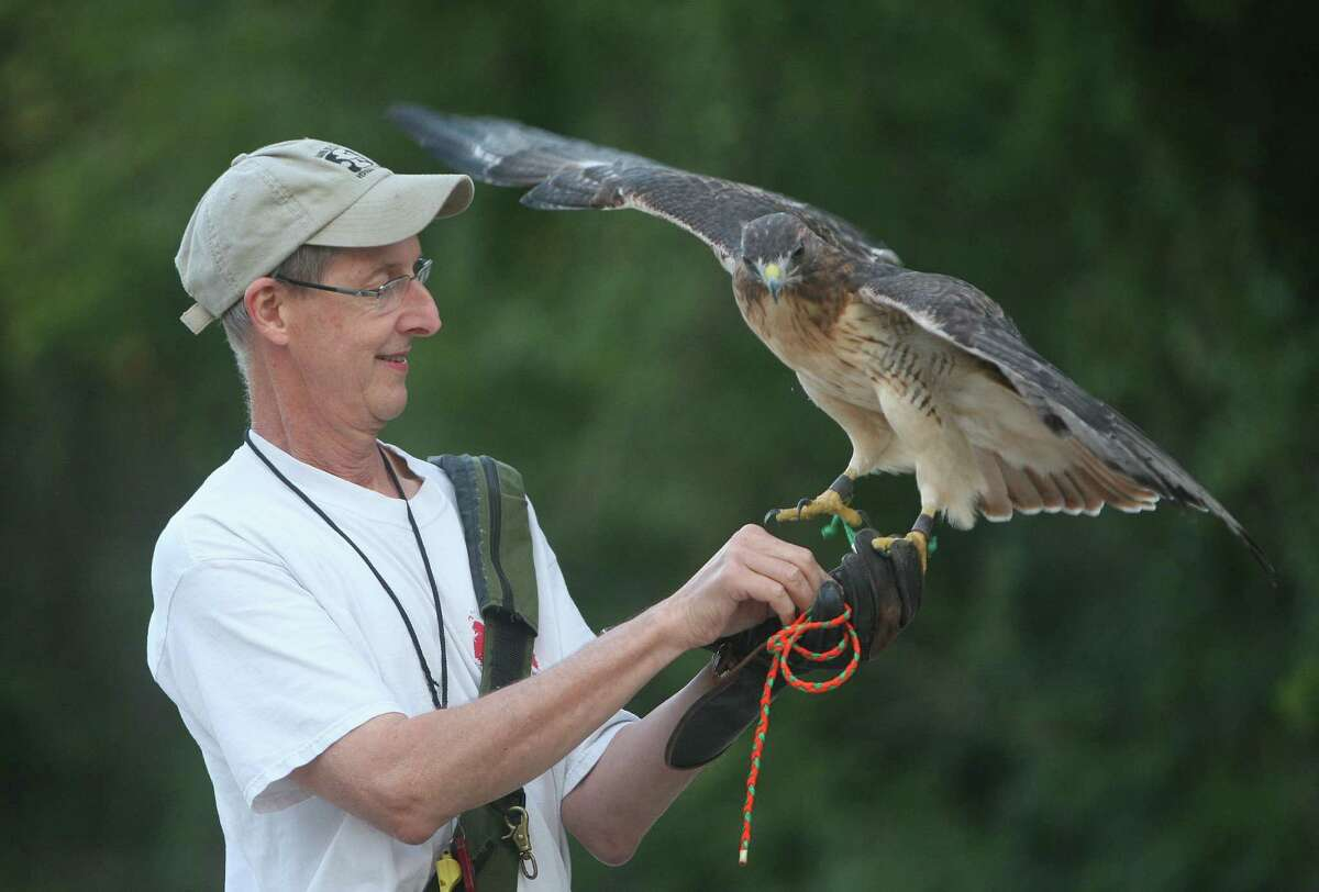 """Chuck Redding with his 7-year-old red-tailed hawk """"Cisco"""" during an outing at Terry Hershey Park."""