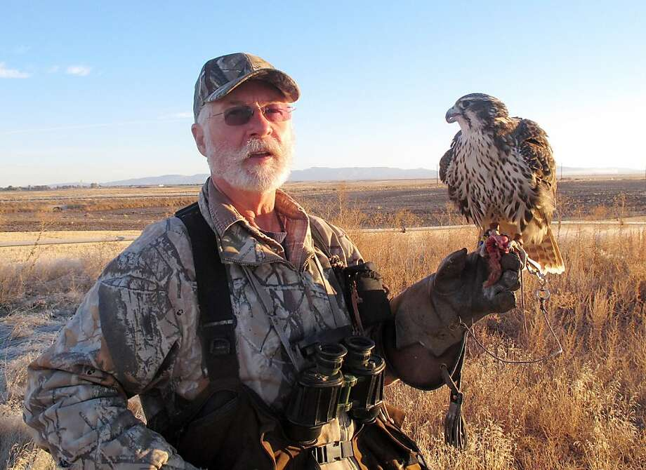 Gary Moon uses his young prairie falcon, Laser, to hunt for game in the southern Idaho desert. Photo: John Miller, Associated Press