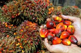"This picture taken on December 6, 2011 shows harvested palm oil fruits at a plantation in Medan.  The French senate commission for social affairs on November 7, 2012 voted to adopt the ""Nutella Amendment"" aiming to increase by 300 percent the exisiting tax on palm oil, notably used in the production of foodstuffs. AFP PHOTO / ATARATAR/AFP/Getty Images"