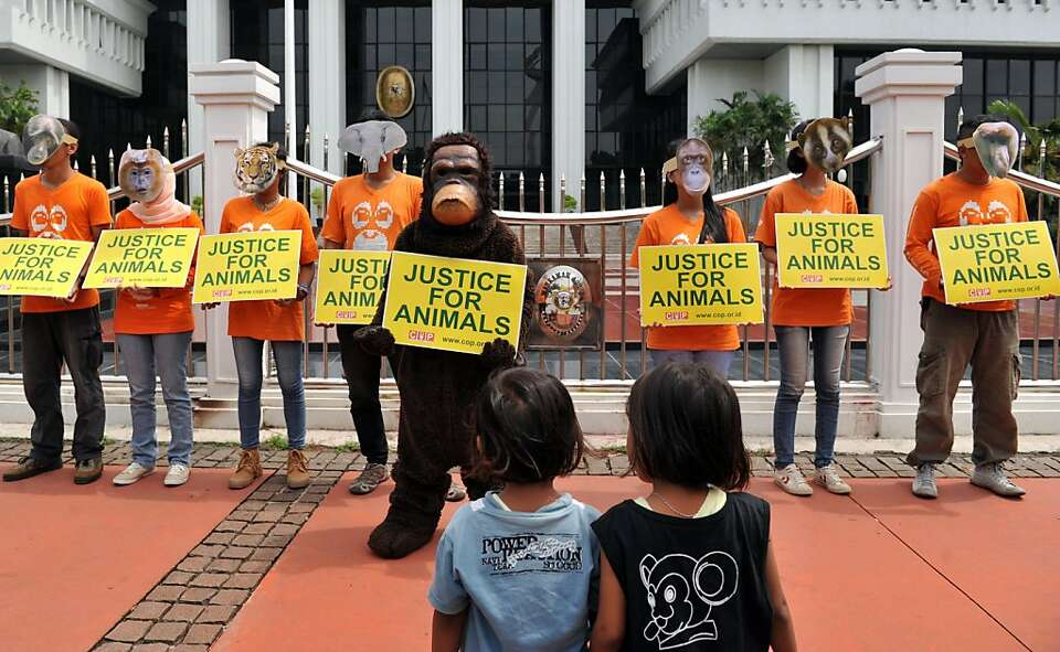 Indonesian activists protest deforestation that's cut in half the number of orangutans in Borneo.