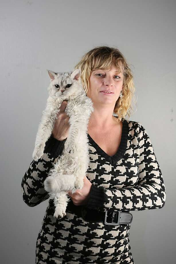 We include Amanda Derbyshire's Selkirk Rex because we like his name - Curly Whirly. Photo: Oli Scarff, Getty Images