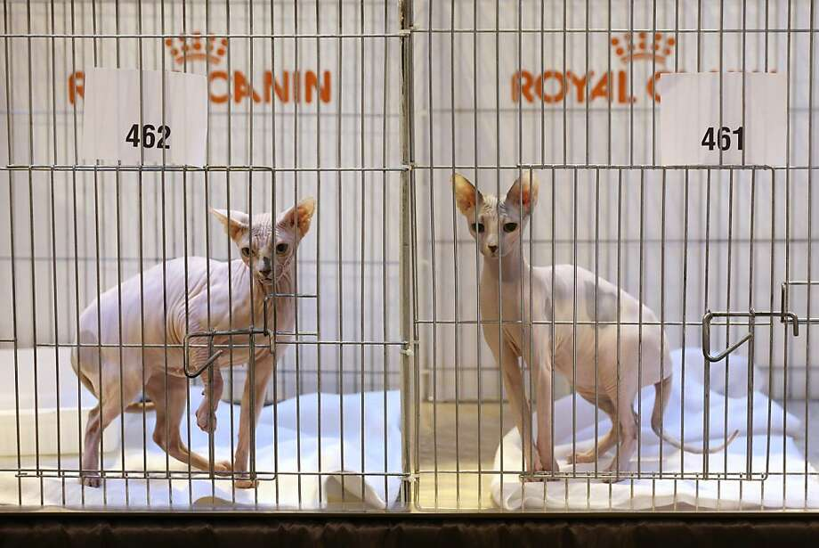 Two hopefuls wait for their fur coats to return from the dry cleaners. Photo: Oli Scarff, Getty Images