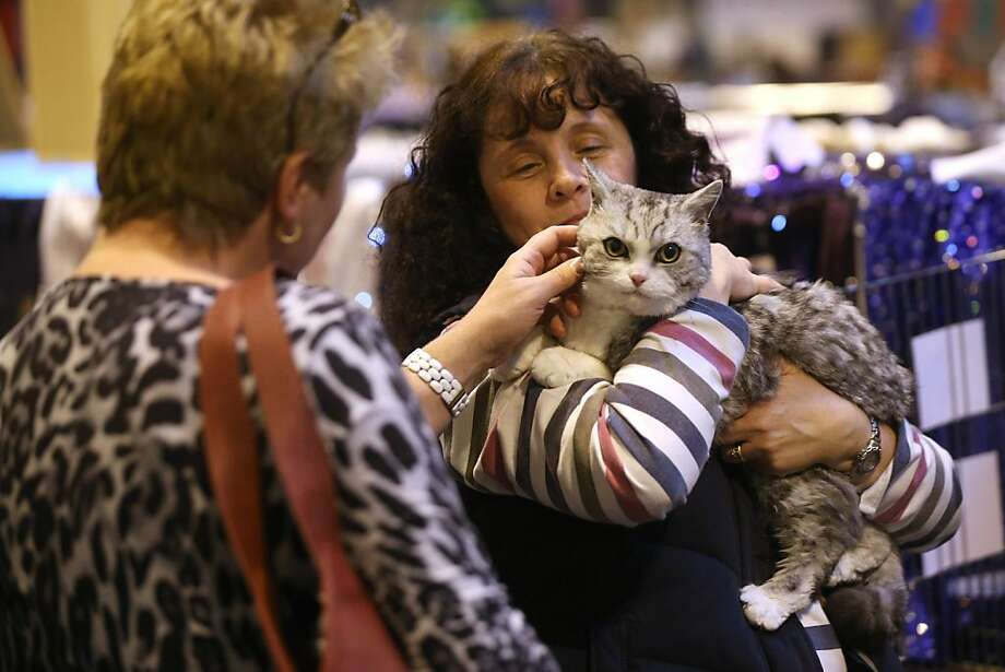 Cheek pinches from strangers is the price one pays for the chance to be anointed Supreme Cat. Photo: Oli Scarff, Getty Images