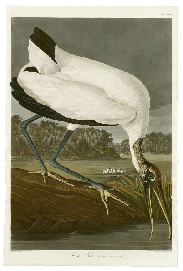 An engraving of a wood ibis by Robert Havell is available at the New Orleans Auction Galleries this weekend. Photo: --