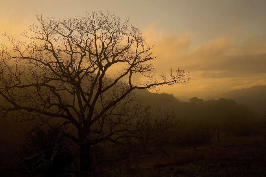 Sunrise at oak woodland at Monte Bello Open Space Preserve (Karl Ghol)