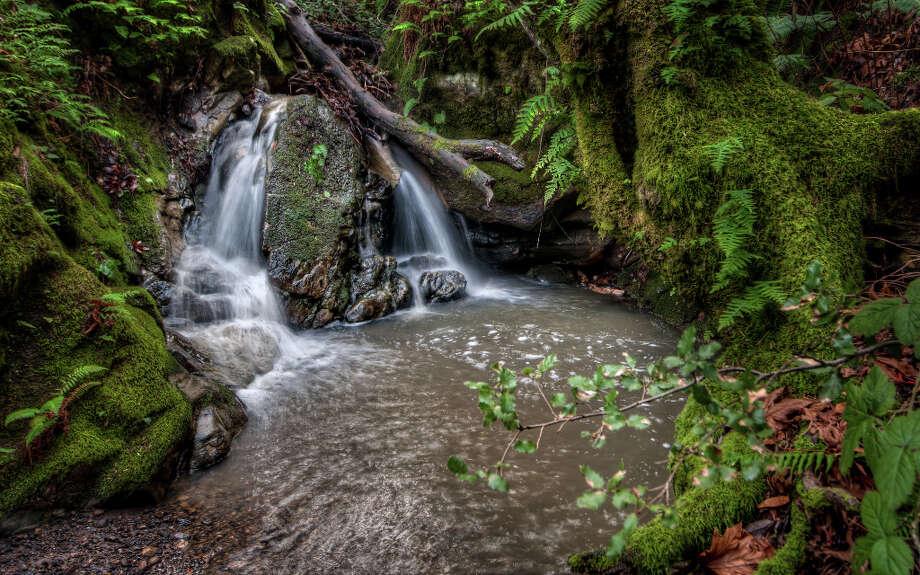 Deep forest creek at Coal Creek Open Space Preserve (Dean Birinyi) / ©Dean J. Birinyi