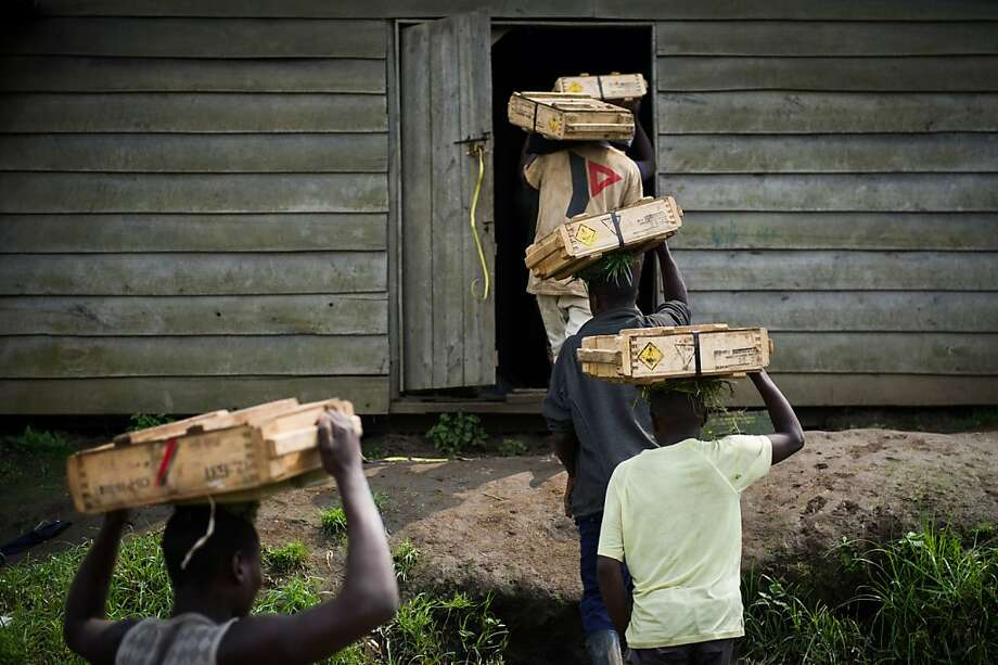 TOPSHOTS  Civilians carry boxes of munitions for M23 rebels in the town of Mushaki, eastern Democratic Republic of Congo, on November 29, 2012. Rebel M23 fighters in eastern Democratic Republic of Congo will hand over the frontline town of Sake on Friday to UN and regional officials, and the key city of Goma will follow, rebels said.       AFP PHOTO/PHIL MOOREPHIL MOORE/AFP/Getty Images Photo: Phil Moore, AFP/Getty Images