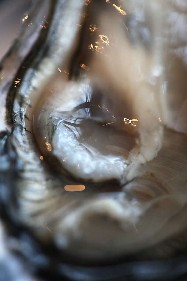 A shucked Drakes Bay oyster is seen in an extreme close up, or 'macro', photograph at Waterbar on Thursday, November 29, 2012 in San Francisco, Calif. Photo: Pete Kiehart, The Chronicle