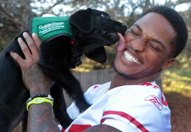 San Francisco 49er cornerback Chris Culliver plays with Radish, a 12-week-old black Labrador puppy, in training with Guide Dogs for the Blind in San Rafael, Calif., on Nov. 26, 2012. (The Chronicle)