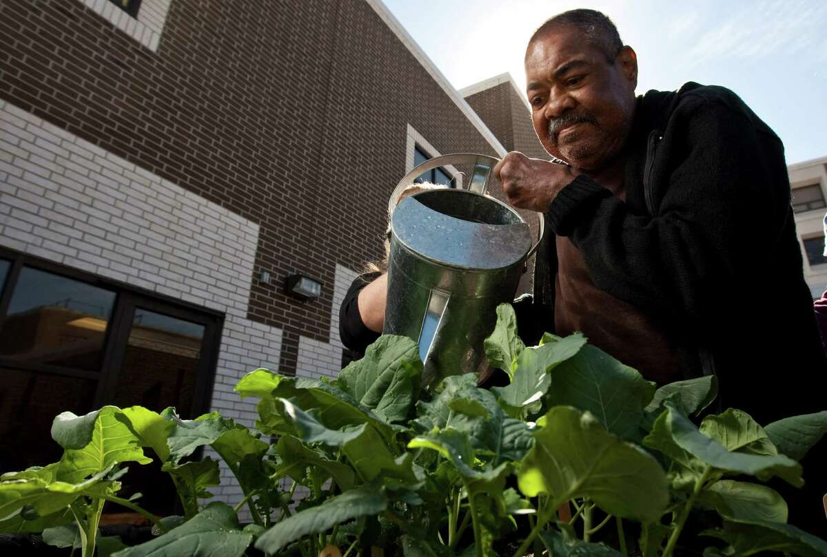Garfield Gibson Jr., a stroke survivor, waters broccoli at the new horticultural therapy garden.