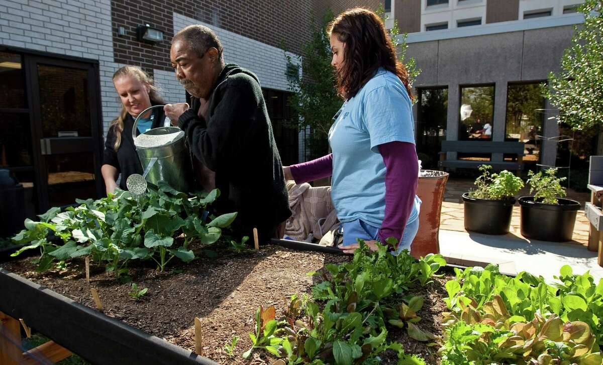 Garfield Gibson, center, a stroke survivor, waters broccoli his therapists Amy Parker, left, and Regina Budet in the new Horticultural Therapy Garden at Quentin Mease Community Hospital. ( Nick de la Torre / Houston Chronicle )