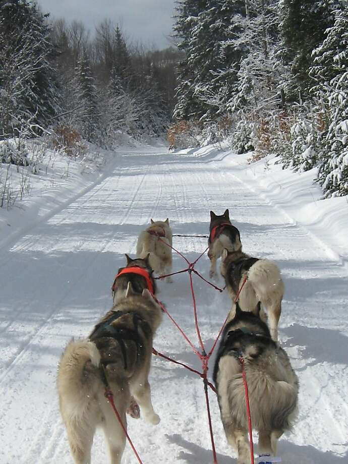 New Hampshire is offering expanded sled tours that explore the woods and White Mountains. Photo: Valley Snow Dogz