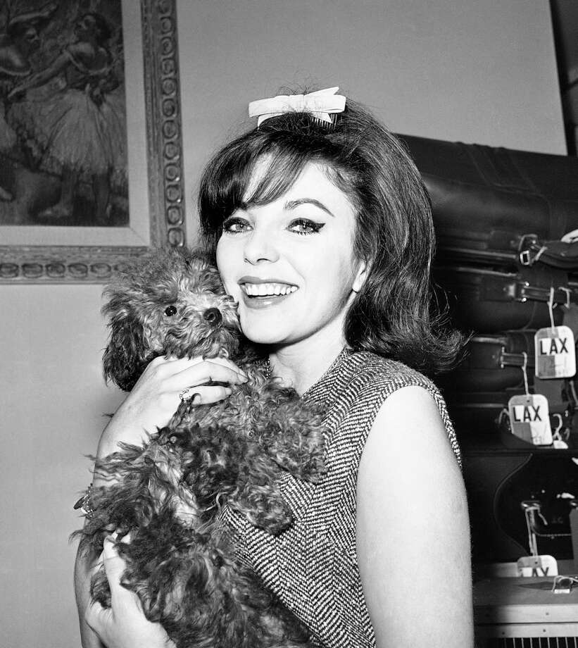 Actress Joan Collins is shown with her French poodle, Ladybird on Jan. 27, 1962. She still looks great -- and so does the poodle.  Ok, maybe the poodle not so much. Photo: Harold Filan, ASSOCIATED PRESS / AP1962