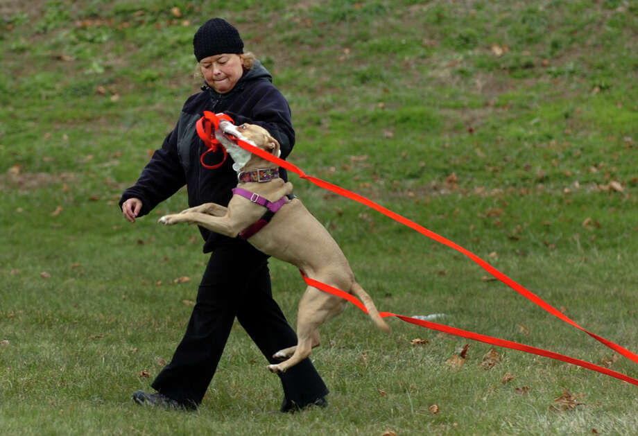 Lisa Taylor gives her pit bull mix Justice some play and exercise time at the ballfield off Melba Street in Milford, Conn. on Friday November 30, 2012. Photo: Christian Abraham / Connecticut Post