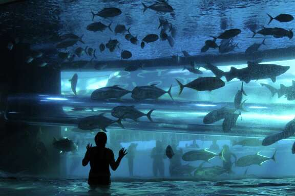 A visitor to the Las Vegas Golden Nugget's pool swims next to the casino's massive aquarium. Tilman Fertitta spent $300 million to renovate the Las Vegas site after purchasing it.