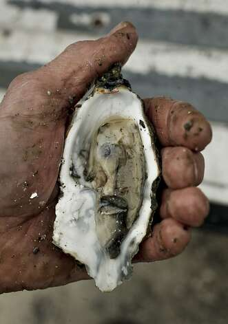 Jon Labaree of Santa Rosa eats an oyster in the parking lot. Photo: Michael Macor, The Chronicle