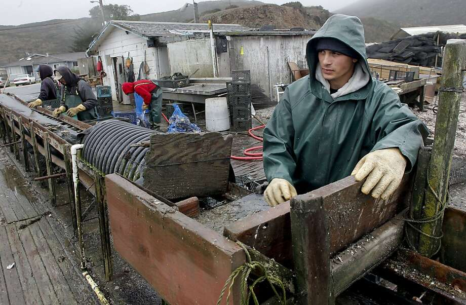 Sean Lunny, a son of the owner of Drakes Bay Oyster Co., works on the farm in 2012. A federal appeals court has put a closure order on hold so the company can seek a hearing by the U.S. Supreme Court. Photo: Michael Macor, The Chronicle