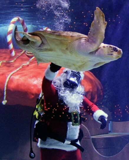 Scuba Santa pets a sea turtle swimming by at the Newport Aquarium, Wednesday, Nov. 28, 2012, in Newp