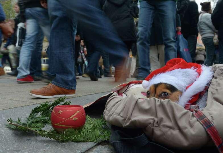 Pedestrians walk past a homeless person's dog wearing a Santa Claus bonnet on December 1, 2012 in a