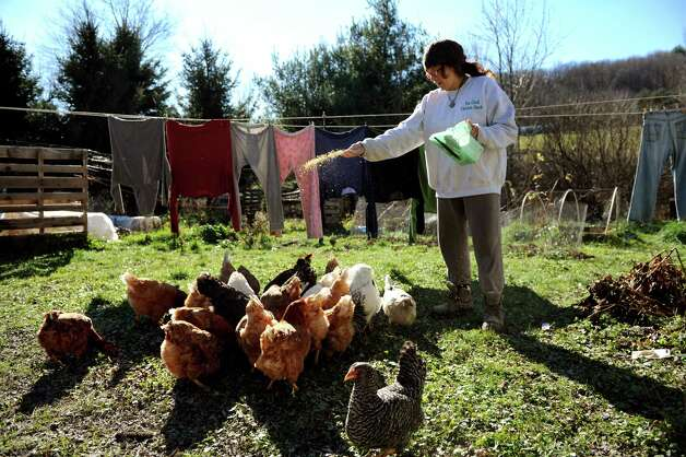 Doreen Tillman, who owns of The Cluck Chicken Hatch with her husband John, feeds the chickens on Wednesday, Nov. 14, 2012, in Franklin Forks, Penn. (Cindy Schultz / Times Union) Photo: Cindy Schultz