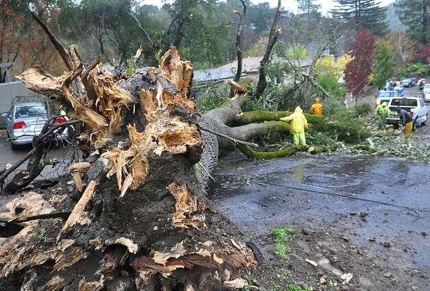 A crew from Vaccaro Tree Service removes a fallen tree along Hickory Road in Fairfax, Calif., Friday, Nov. 30, 2012. Weather officials are issuing flood warnings for much of Northern California as the second in a series of wet storms hits the state. The National Weather Service has issued a variety of warnings for heavy rain, snow, high winds and floods from the San Francisco Bay area to the Oregon border. (AP Photo/Marin Independent Journal, Robert Tong) Photo: Robert Tong, Associated Press