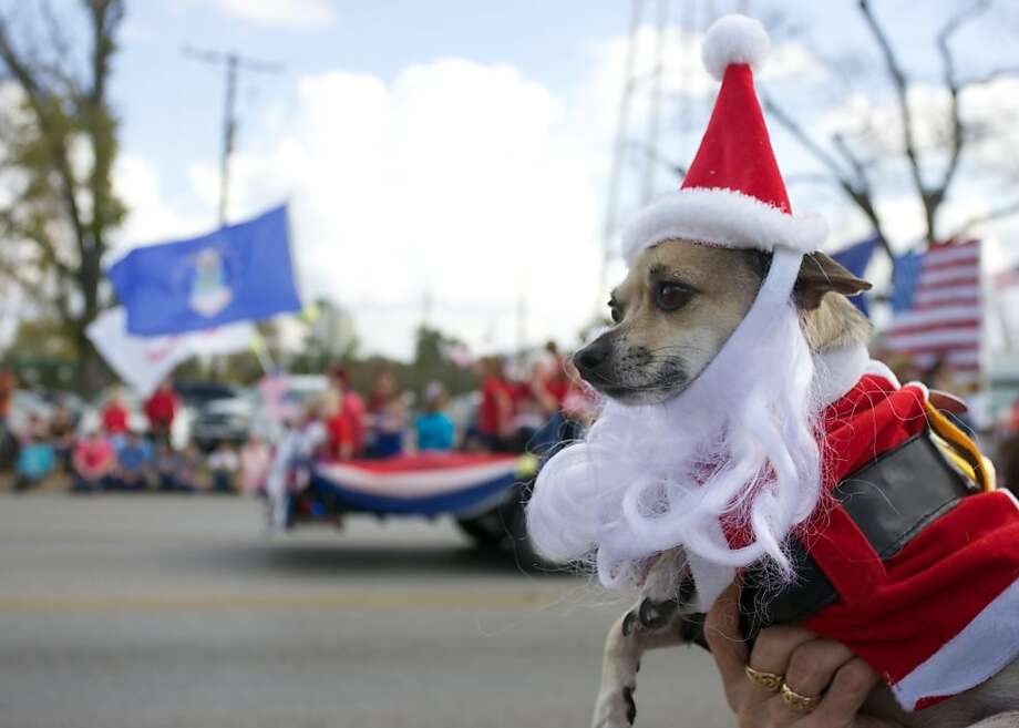 Yoda, a six year old Chihuahua, sports a festive outfit as he watches the annual City of Willis Christmas Parade from the arms of his owner Deanna Wickes on Saturday, Dec. 1, 2012 in Willis, Texas. (AP Photo/The Courier, Eric Swist) Photo: Eric Swist, Associated Press