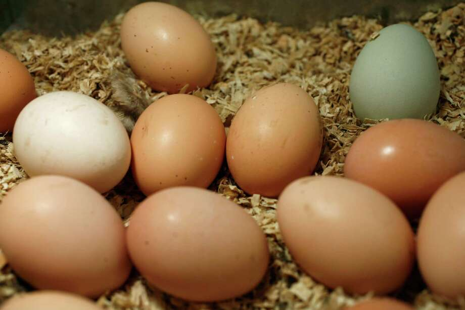 Eggs with brown shells or white shells are equally nutritious. Photo: Photo By Craig Lee / SFC / The Chronicle