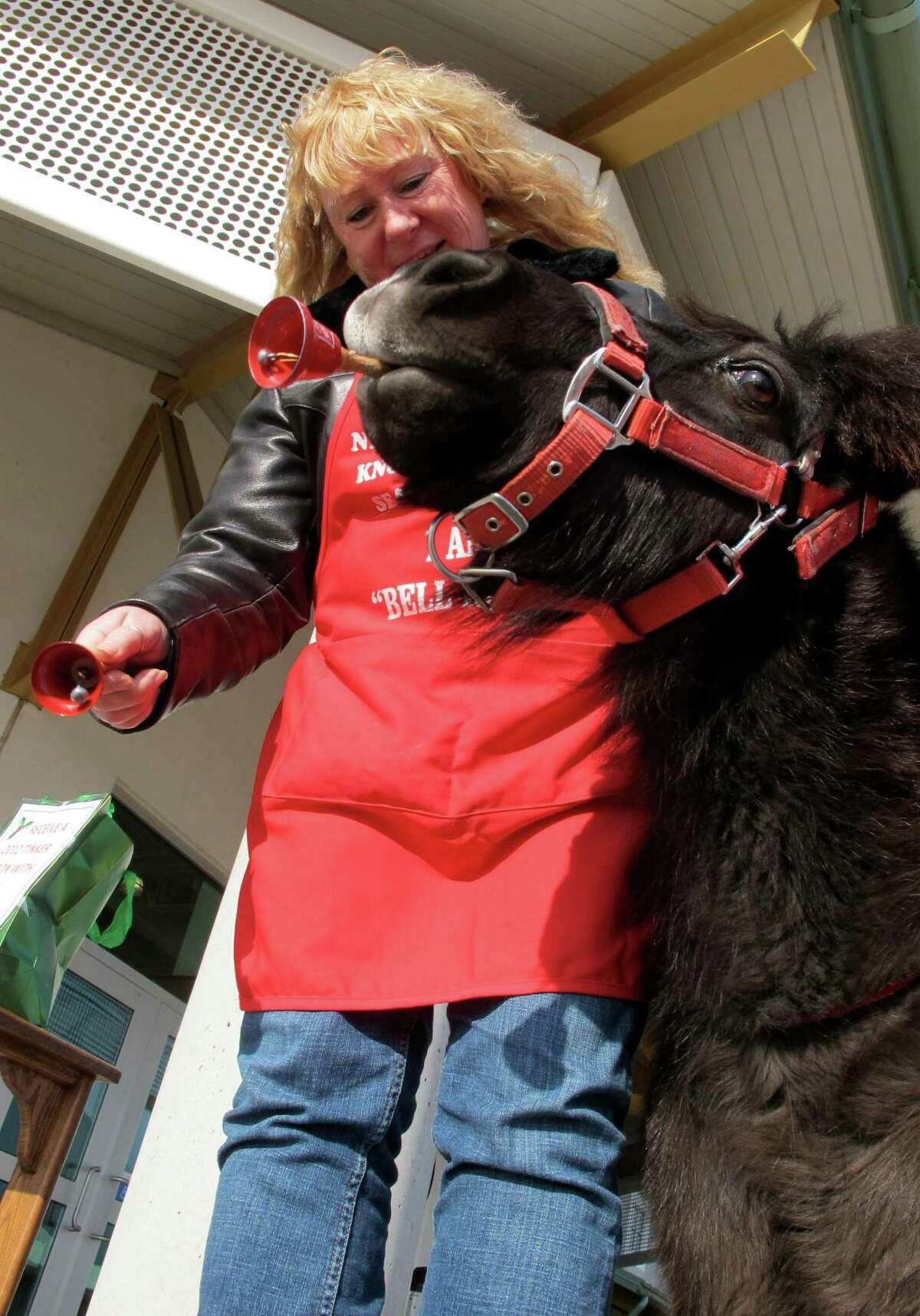 In this Nov. 17, 2012 photo Tinker, a miniature horse, rings a red bell for the Salvation Army with his owner Carol Takacs in West Bend, Wis. Takacs says his name was Tinker when she and her husband got him and they couldn't have named him better if they tried.