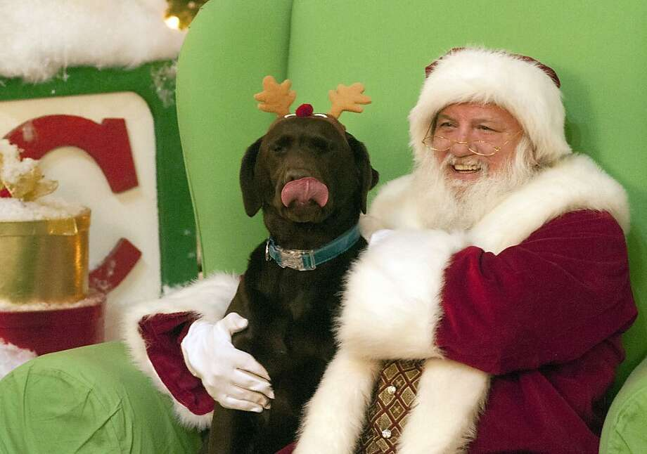 Santa's little rein dog:Zoe tells St. Nick exactly what she wants for Christmas at the Solomon Pond Mall in Northboro, Mass. - more Snausages! Photo: Betty Jenewin, Associated Press