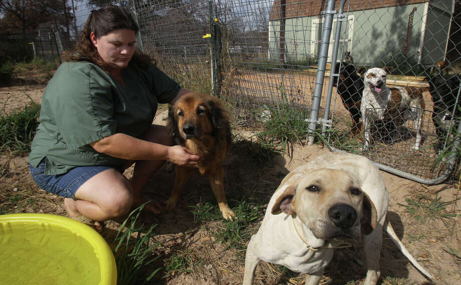 Vickie Eckert runs the Tri-City Animal Sanctuary near Poteet, Texas. The non-profit offers a haven for abused and homeless cats and dogs in the Atascosa County area. Eckert says she currently has 98 dogs and needs funding to continue vaccinations, surgeries kennel repairs. Photo: John Davenport/© San Antonio Ex, San Antonio Express-News / ©San Antonio Express-News/Photo Can Be Sold to the Public