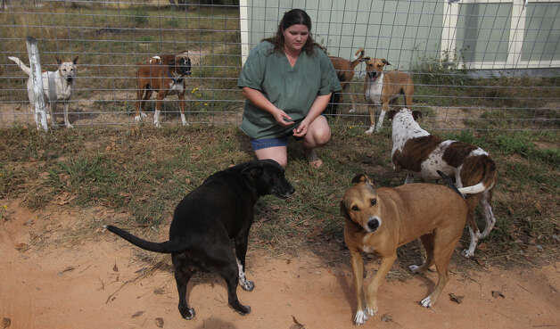 Vickie Eckert runs the Tri-City Animal Sanctuary near Poteet, Texas. The non-profit offers a haven for abused and homeless cats and dogs in the Atascosa County area. Eckert says she currently has 98 dogs and needs funding to continue vaccinations, surgeries kennel repairs. Photo: JOHN DAVENPORT, San Antonio Express-News / ©San Antonio Express-News/Photo Can Be Sold to the Public